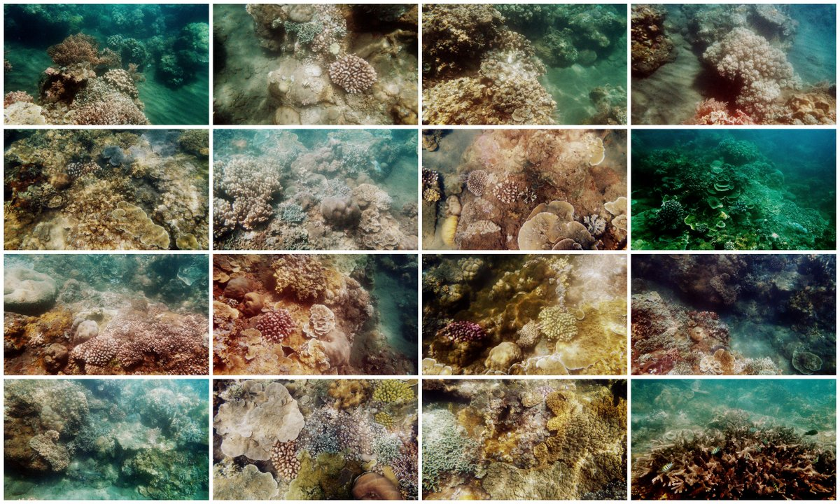 amed underwater collage