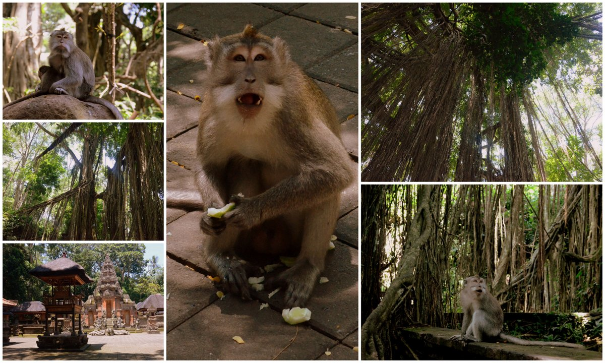 monkey forest collage 2