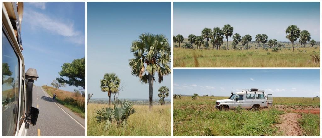uganda murchinson 5