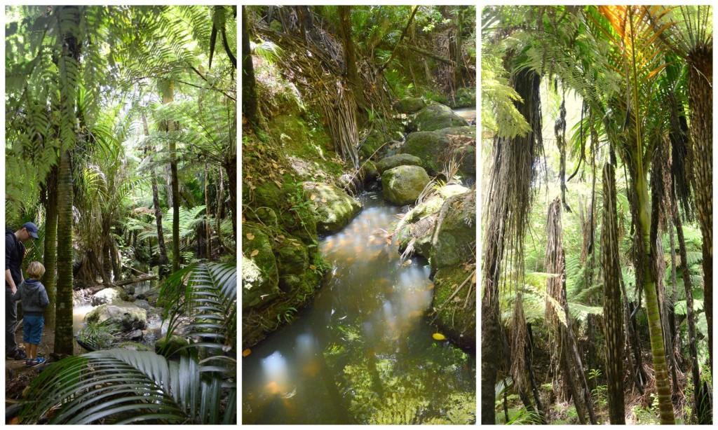 waiheke forests