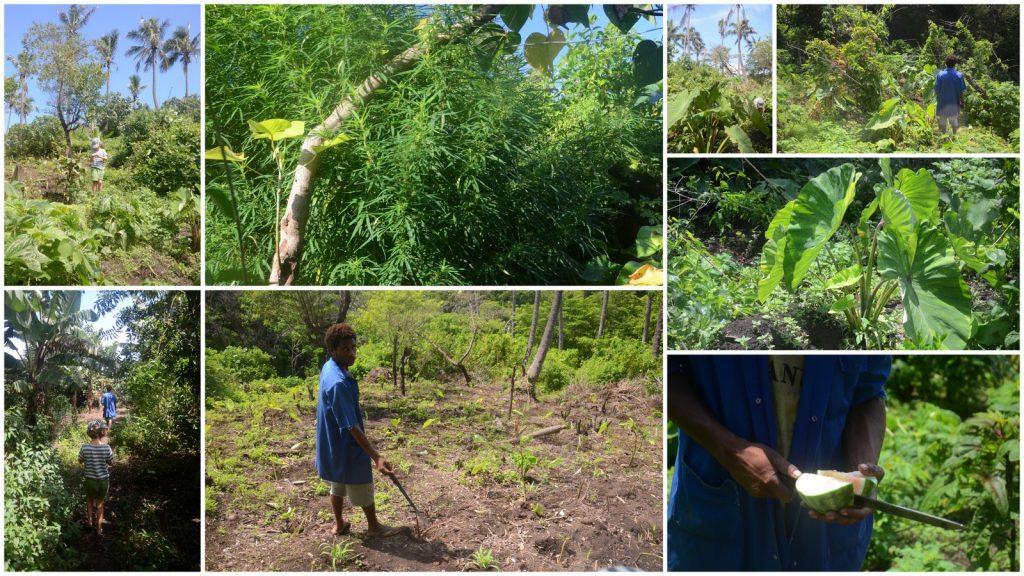 tanna island vanuatu yakel village garden travel blog