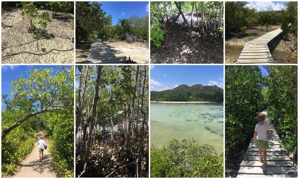 Curieuse island mangroves Praslin boat trip Seychelles