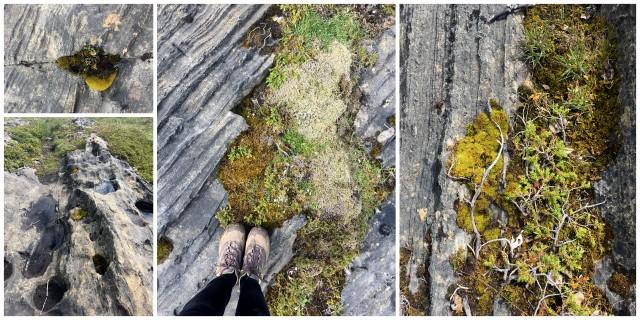 Vega archipelago moss
