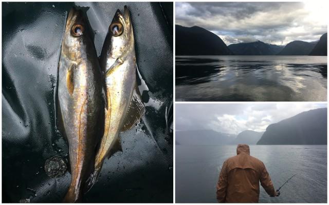 fjord fishing norway norveska ribolov