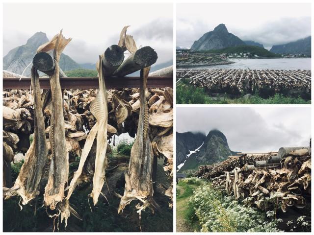 Reine Lofoten Norway dried fish