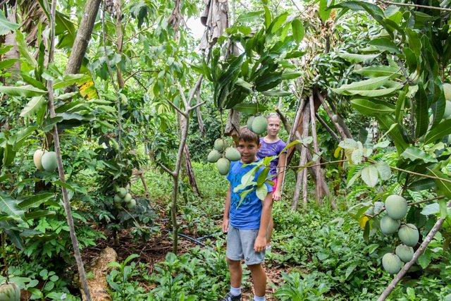 Špela in Tjaž v tropskem vrtu, Kuba