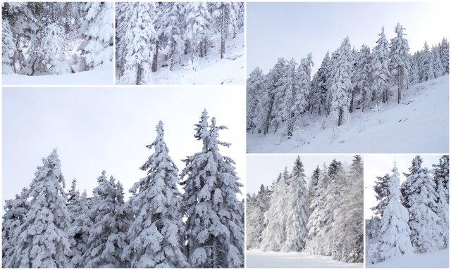 bodenmais Germany Großer Arber Bavarian forest national park
