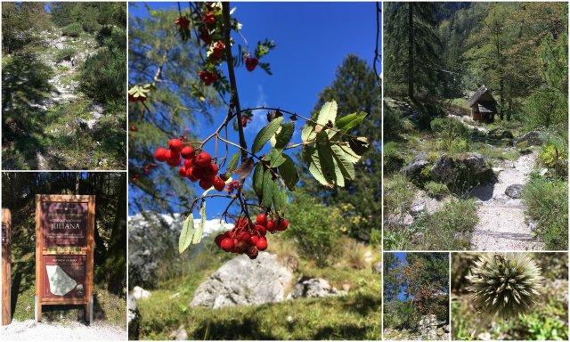 Alpski botanicni vrt Julijana Slovneija Trenta dolina Soce Alpine botanical garden Soca valley Slovenia
