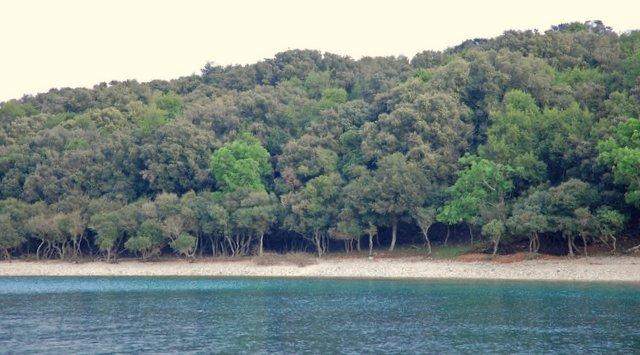 Plaža Brijuni Hrvaška Croatia